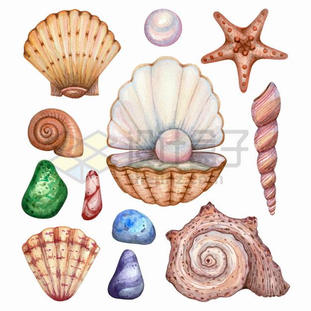 各种贝壳珍珠鹅卵石海星等海洋生物水彩插画png图片素材 生物自然-第1张