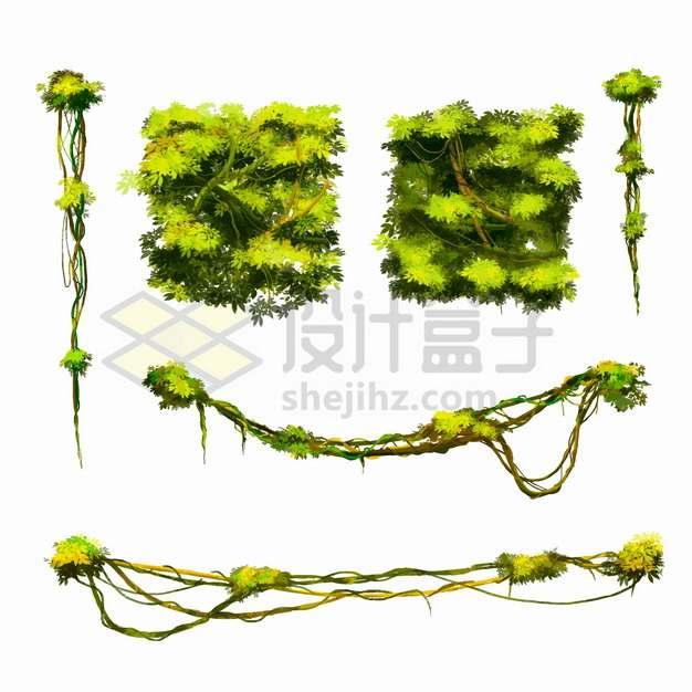 热带雨林中的藤蔓和灌木丛装饰png图片素材