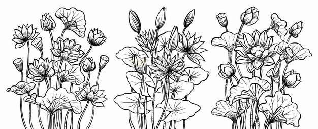 3款荷花荷叶莲蓬手绘黑色线条插画png图片素材