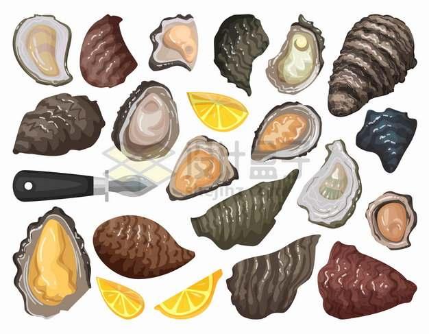 各个品种的牡蛎美味海鲜png图片素材