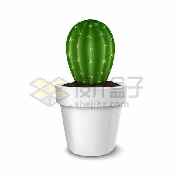 白色陶瓷花盆中的仙人掌仙人球盆栽绿植434801png图片素材