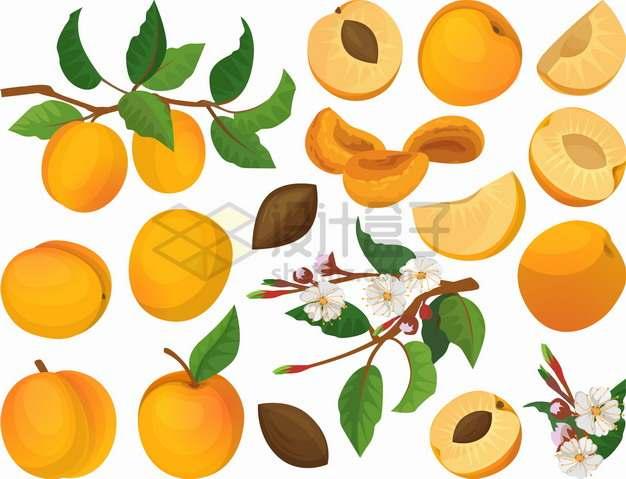 枝头上的桃子水蜜桃黄桃美味水果png图片素材