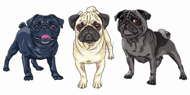 三种不同毛色的八哥犬哈巴狗宠物狗狗品种彩绘插画png图片素材