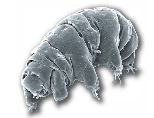 显微镜下的水熊虫缓步动物873002png图片素材
