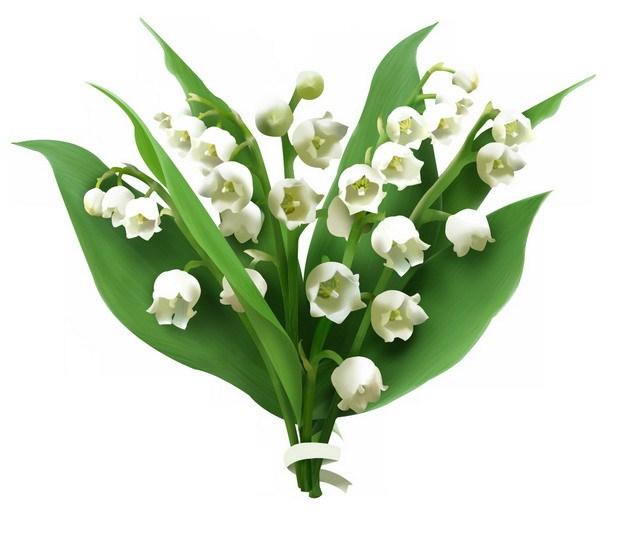 铃兰花白色小花朵569464png图片素材 生物自然-第1张