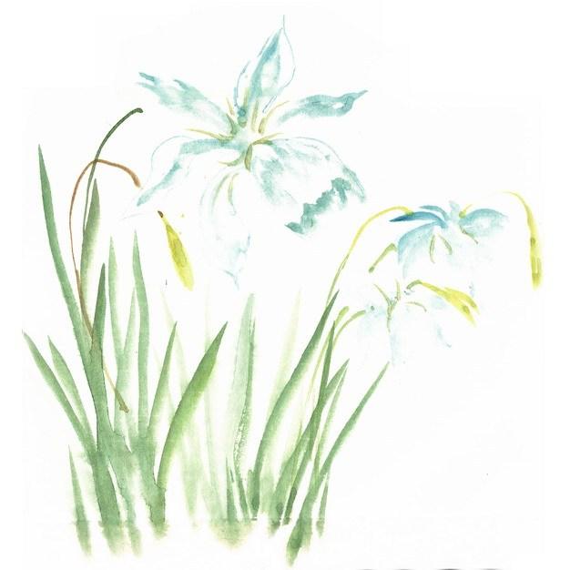 开了小花的菖蒲水彩插画357694png图片素材 生物自然-第1张