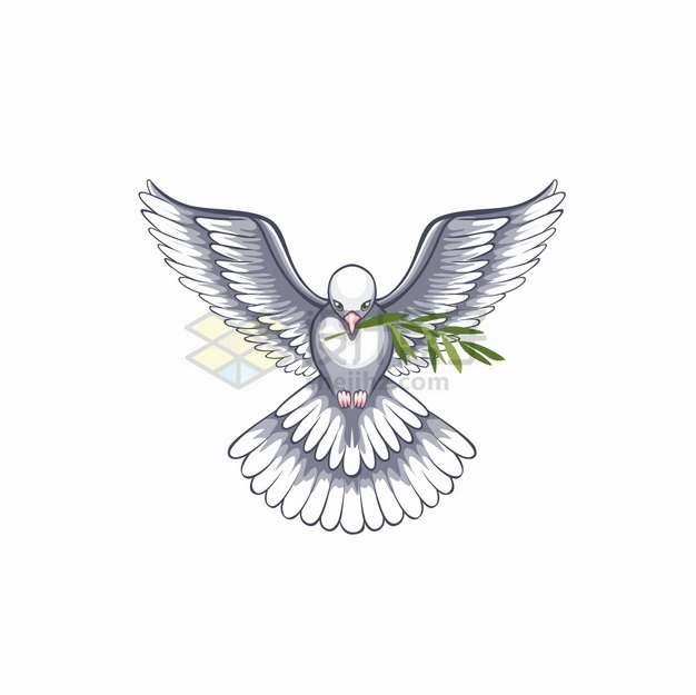 衔着橄榄枝的灰白色和平鸽5969545png图片素材