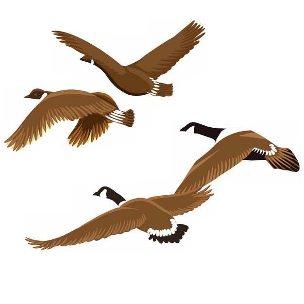 一群飞行中的野鸭大雁插画png图片素材