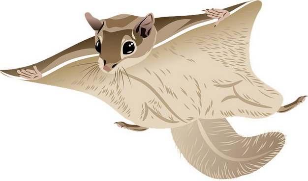 滑翔中的寒号鸟复齿鼯鼠卡通动物495346png图片素材