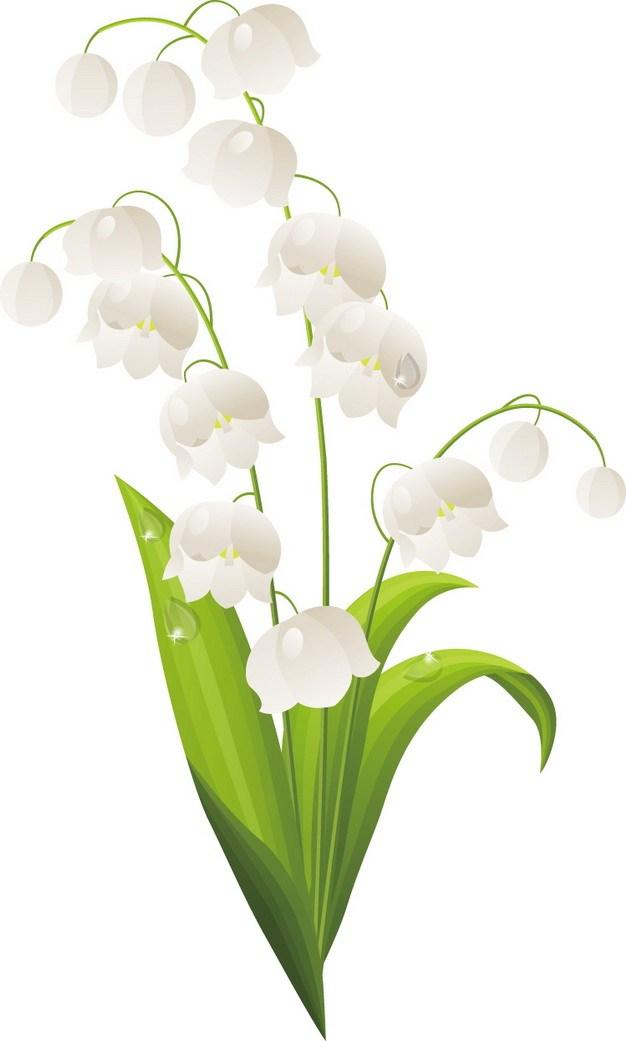 铃兰花白色小花朵124153png图片素材 生物自然-第1张