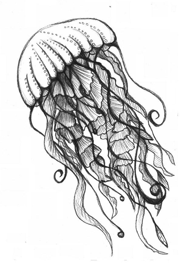 冥河水母手绘插画676366png图片素材 生物自然-第1张