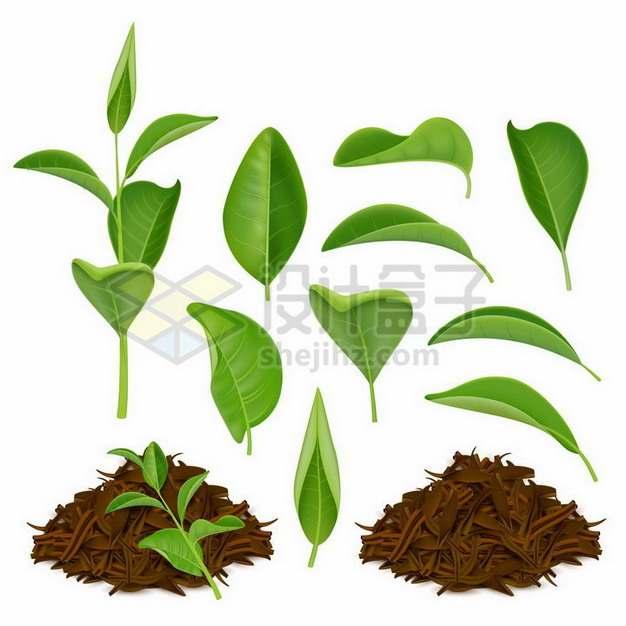 各种绿色的茶叶绿茶红茶262959png矢量图片素材