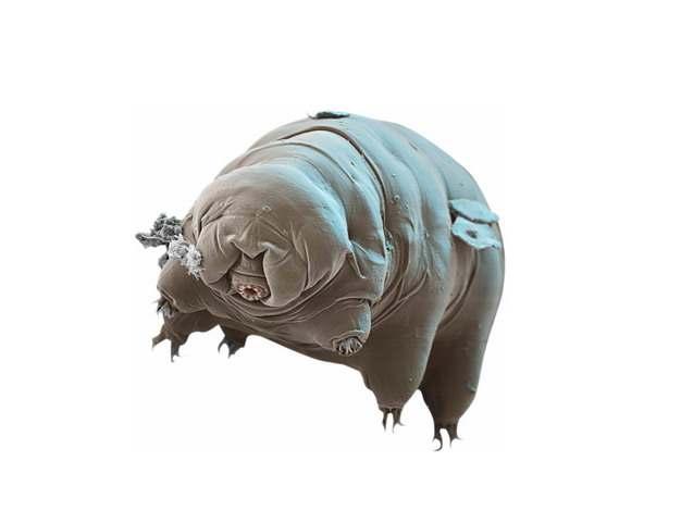 显微镜下逼真的水熊虫缓步动物820271png图片素材