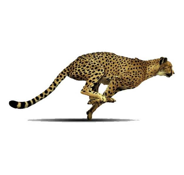 快速奔跑中的猎豹952230png图片素材