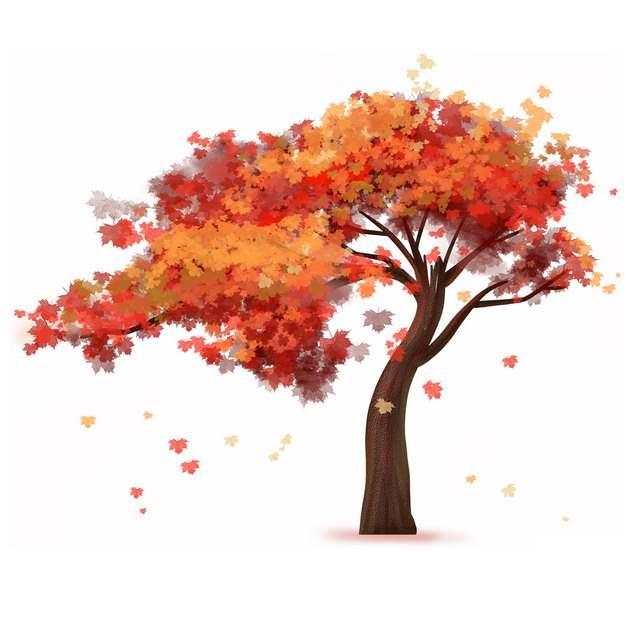 秋天树叶变红的大树凤凰树水彩插画224732png图片免抠素材