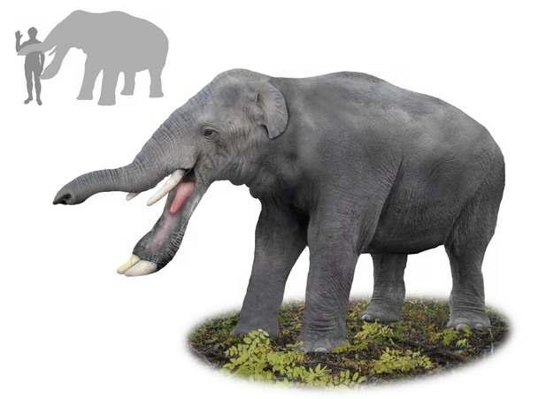 铲齿象灭绝大象古生物148574png免抠图片素材