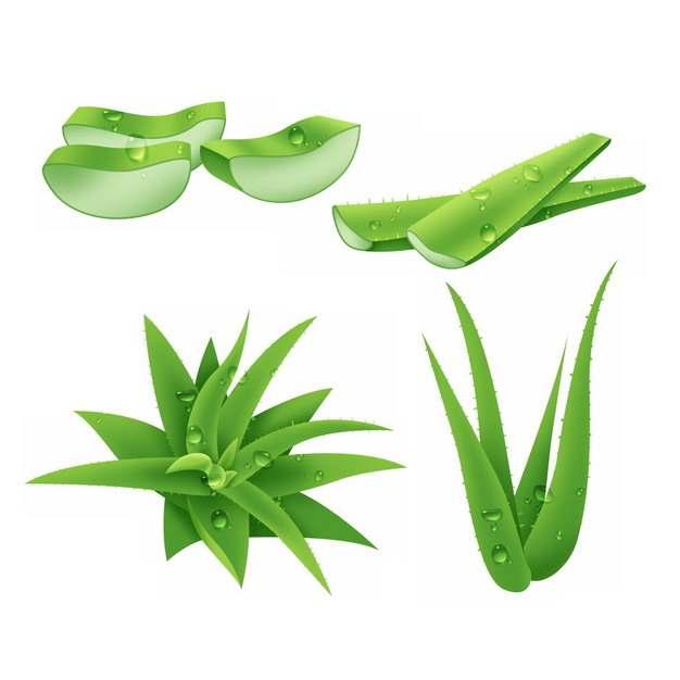 翠绿色的芦荟叶子和切段729060 png图片素材