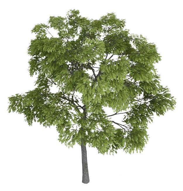 一棵绿色大树459800png免抠图片素材