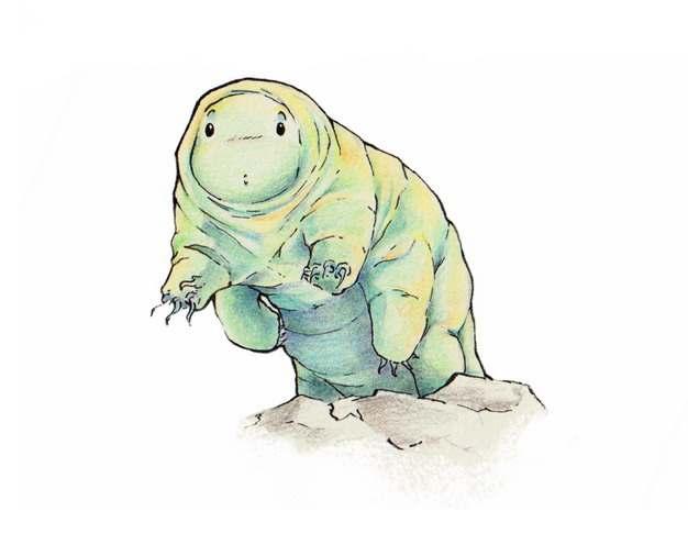 可爱的卡通水熊虫缓步动物手绘插画214895png图片素材