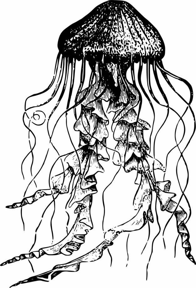 黑白手绘风格夜光游水母430137png图片素材