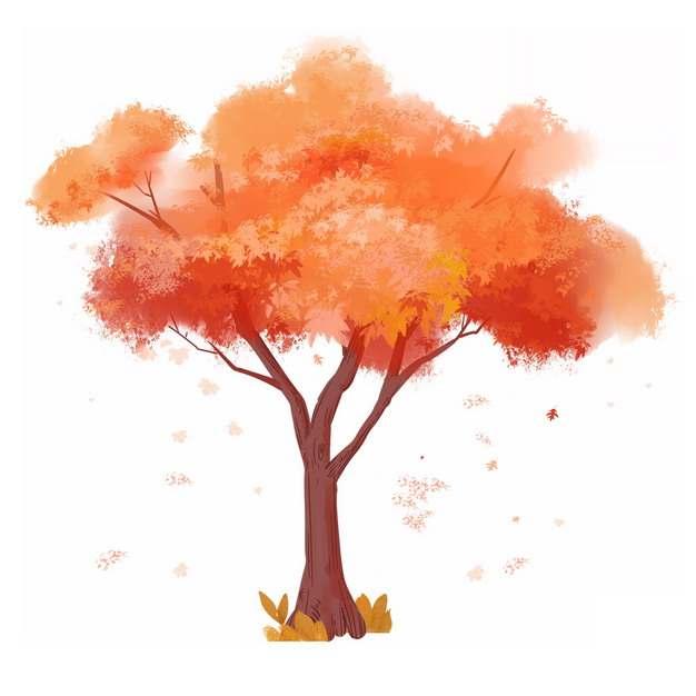 秋天树叶变红的大树凤凰树水彩插画821076png图片免抠素材