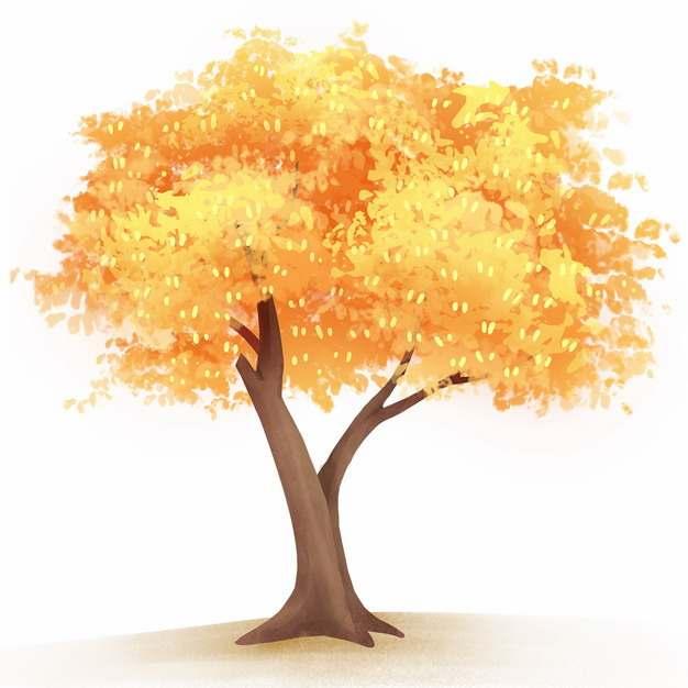 秋天金黄色树叶的大树水彩插画917390png图片免抠素材