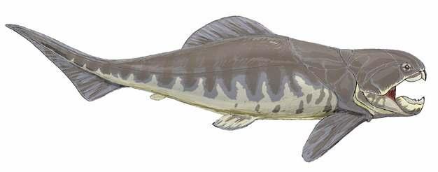 邓氏鱼远古生物584999png免抠图片素材