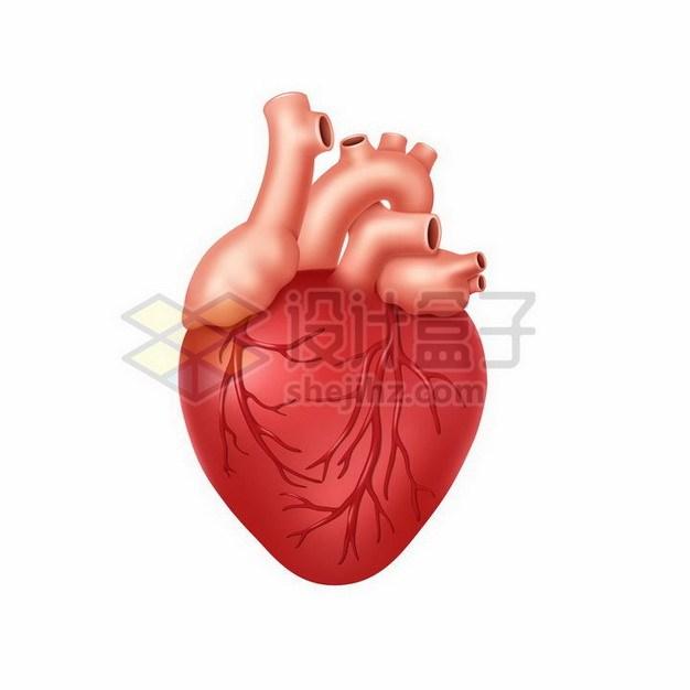 一颗红色的人体心脏730674png矢量图片素材 健康医疗-第1张