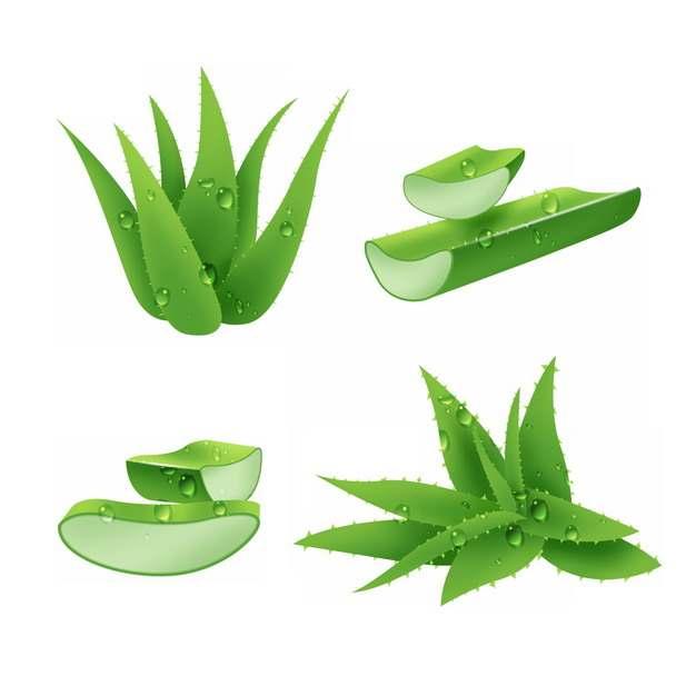 翠绿色的芦荟叶子和切段630855 png图片素材