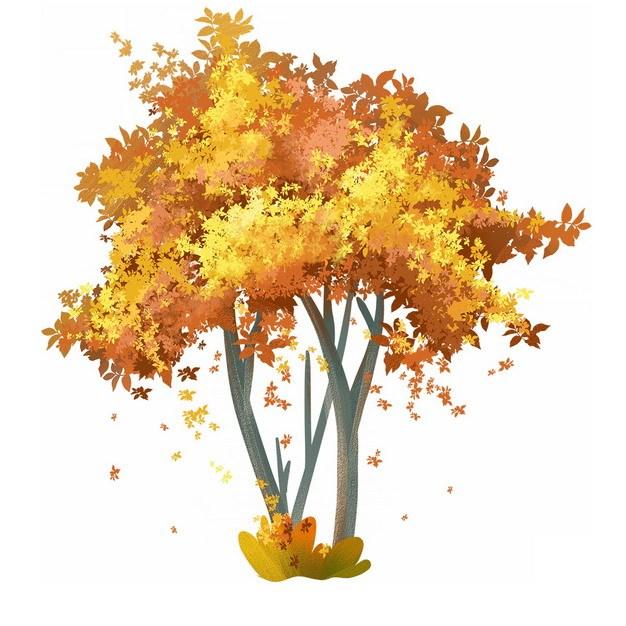 秋天金黄色树叶的大树水彩插画551954png图片免抠素材 生物自然-第1张