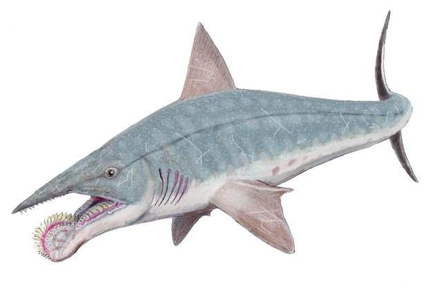 旋齿鲨灭绝鲨鱼远古生物708352png免抠图片素材