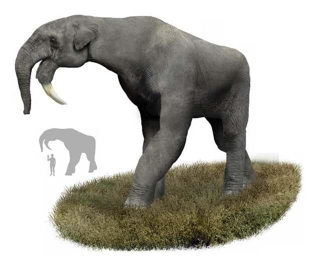 恐象灭绝大象远古生物804506png免抠图片素材
