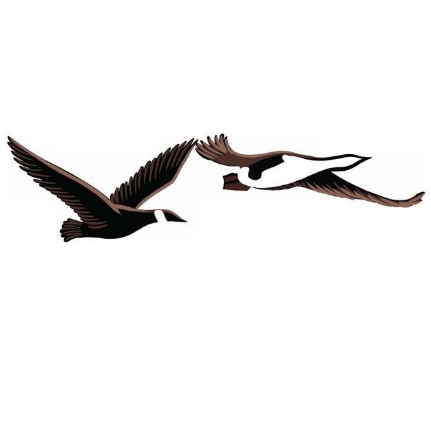 飞行中的野鸭插画png图片素材 生物自然-第1张