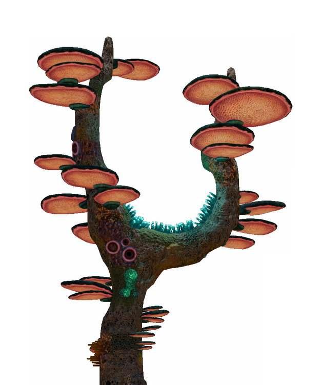 树干上的蘑菇108337png免抠图片素材