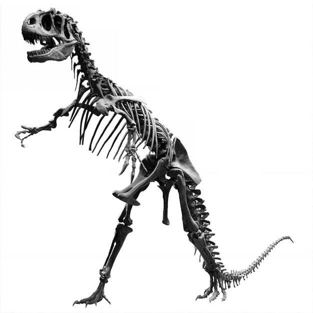 黑白色恐龙骨架284746png免抠图片素材