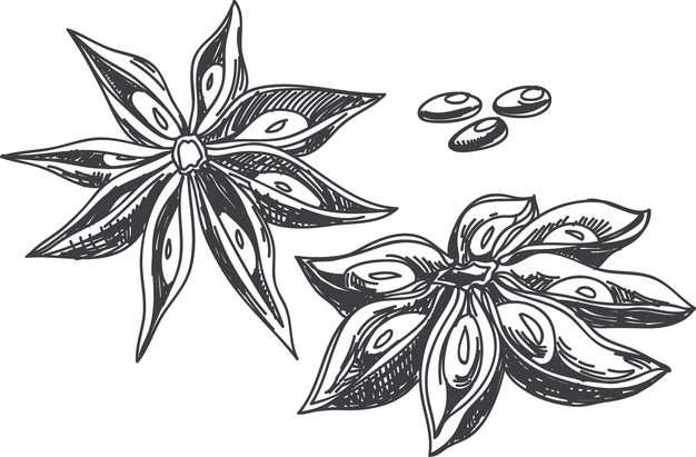 大茴香八角香料手绘插画208869png图片素材