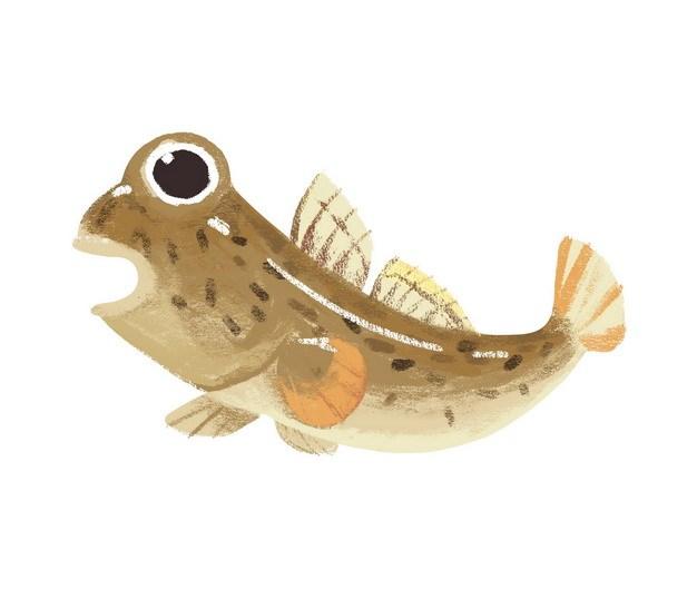 卡通弹涂鱼跳跳鱼手绘插画183363png图片素材 生物自然-第1张