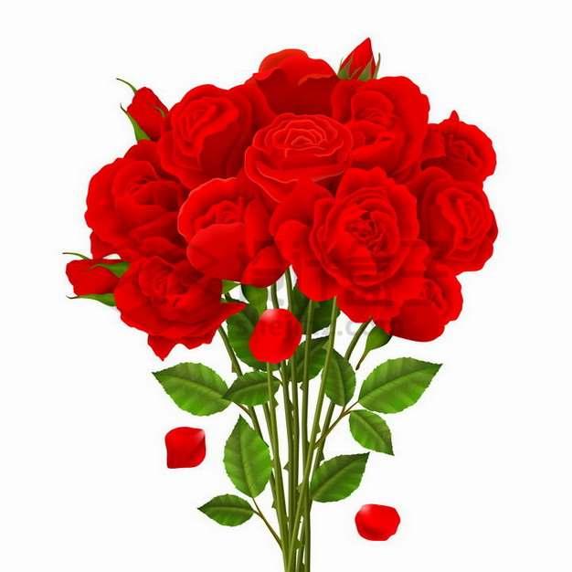 一束盛开的红色玫瑰花花朵花瓣鲜花821186png矢量图片素材