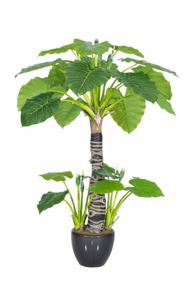 巴西木盆栽植物103042png图片素材 生物自然-第1张