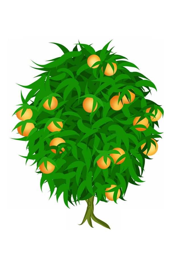 结满果实的果树png图片素材
