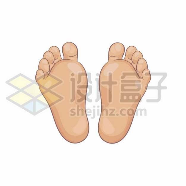 人体脚心脚掌双足脚底板581797png矢量图片素材