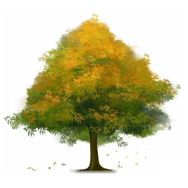 秋天树叶慢慢变黄的大树水彩插画385295png图片免抠素材