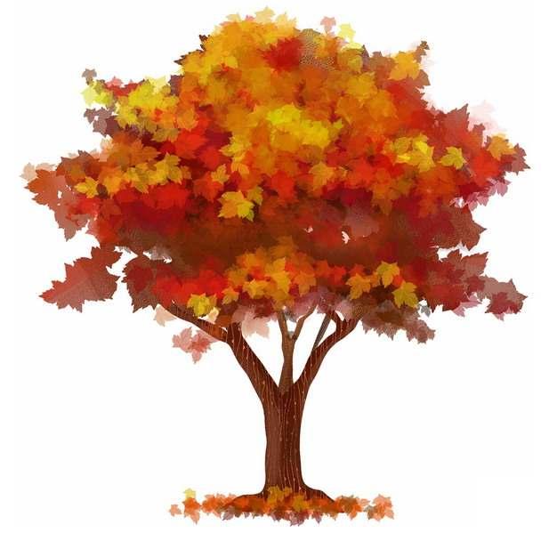秋天火红色树叶的大树水彩插画570173png图片免抠素材