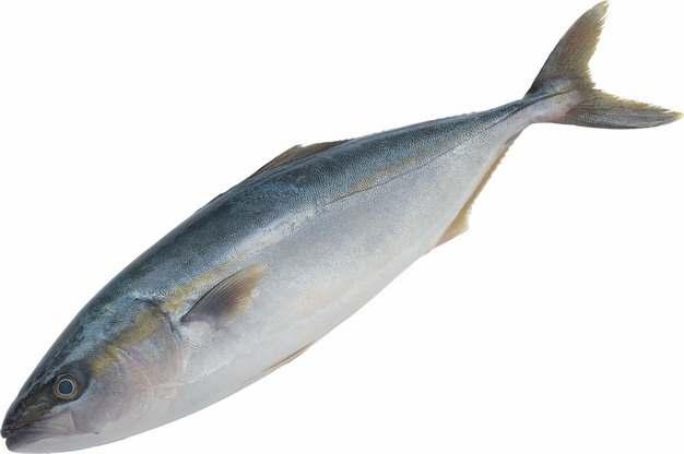 一条鱽鱼刀鱼940336png图片素材