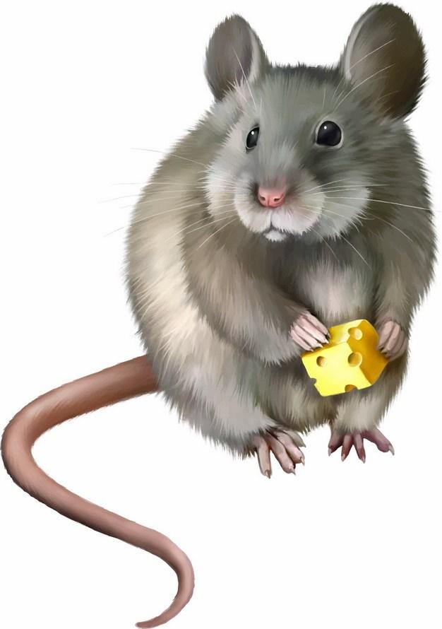 一只卡通老鼠正在偷吃奶酪246569png图片素材 生物自然-第1张