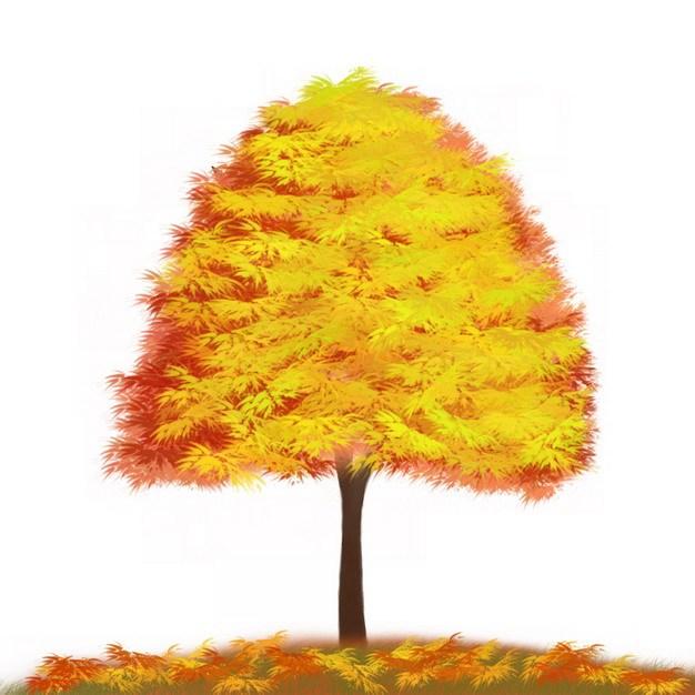秋天金黄色树叶的大树水彩插画212523png图片免抠素材 生物自然-第1张