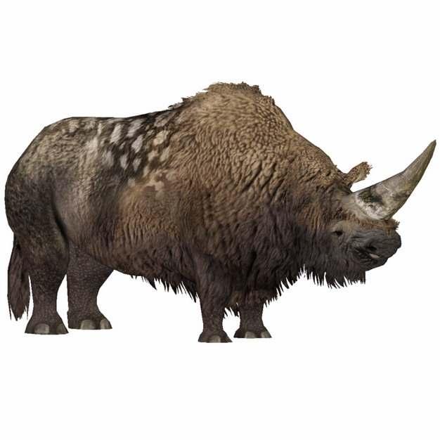 长毛犀牛披毛犀远古生物895290png免抠图片素材