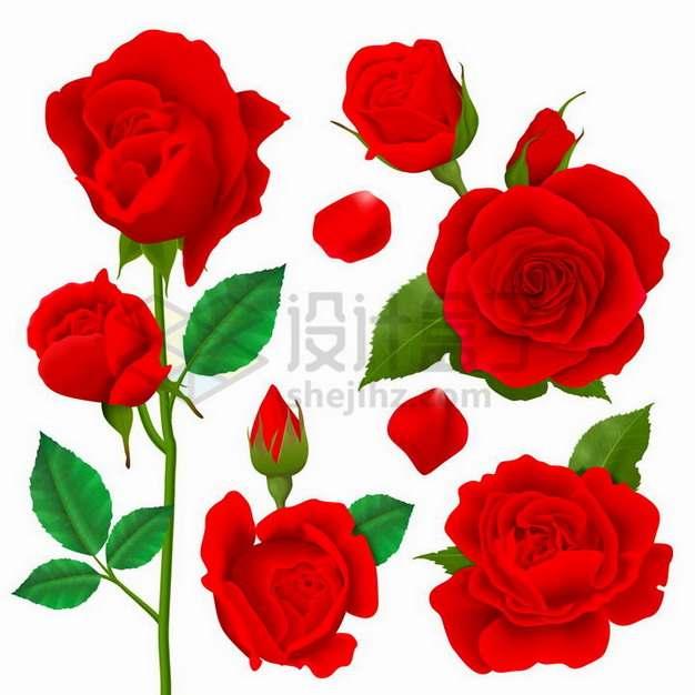 各种红色玫瑰花花朵花瓣鲜花756515png矢量图片素材