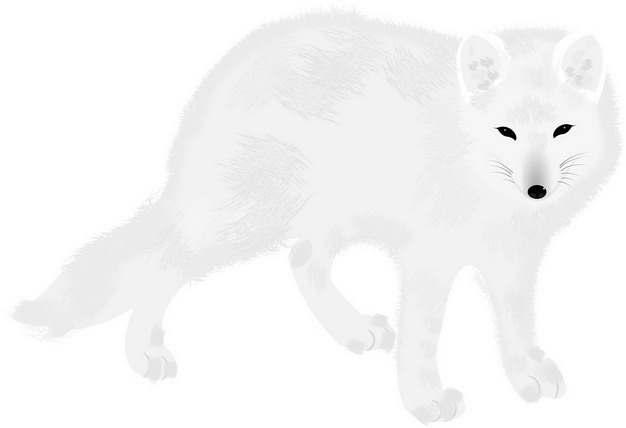 可爱的北极狐北极动物994231png图片素材
