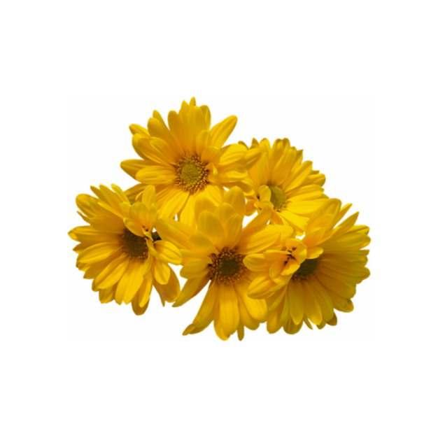 几朵金盏菊花朵鲜花677392png免抠图片素材